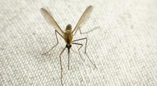 Способы спасения от комаров