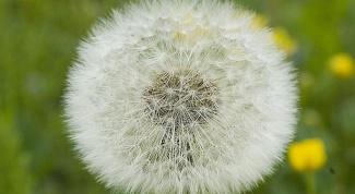 Как создать гипоаллергенный сад