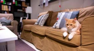 Как подготовить кошку к переезду