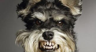 Как меняются зубы у собак