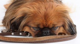 Как собаки переносят переезд