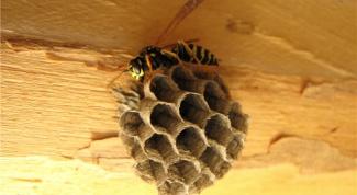 Как избавиться от ос и убрать осиное гнездо