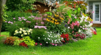 What perennial flowers can I sow in June