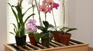 Is it possible to grow an Orchid at home