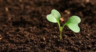 В какой день лучше сеять семена