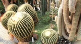 В какой почве следует посадить кактус
