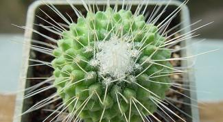 Все для выращивания кактусов