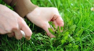 Как убрать сорняки