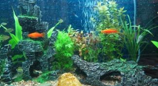 Как избавиться от налета в аквариуме