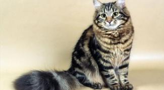 Как давать кошке