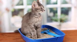 Каак выбрать наполнитель для кошачьего лотка