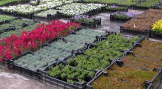 Как выбрать питомник растений
