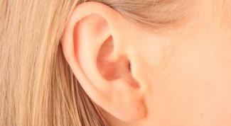 Какие функции выполняют отделы органа слуха человека