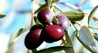 Греческий соус из черных оливок
