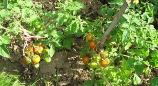 Болезни томатов: способы лечения