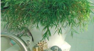 Растения для ванной комнаты с окном