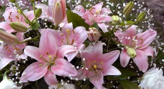 Как составить и сохранить букет из лилий
