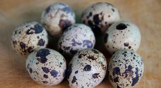 Перепелиные яйца: суперпродукт для здоровья