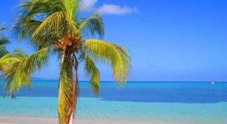 Что интересного посмотреть на Ямайке