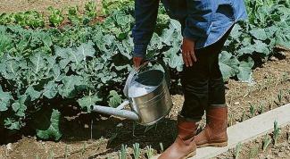 Как выбрать садовую лейку