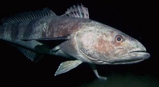 Какая рыба самая вкусная и полезная