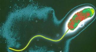 Почему холера опасна