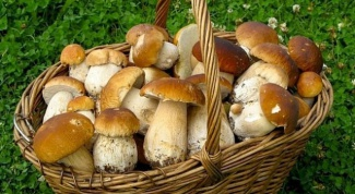 How to distinguish edible mushrooms from poisonous