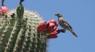 Как выбрать семена кактуса