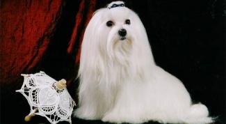Какие собаки живут дольше всего