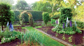 How to place in the garden: planting vegetables, shrubs and trees
