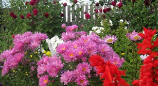 What flowers are best to plant in the garden