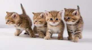 Look like kittens in a month