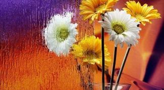 Все о гербере: как ухаживать за цветком