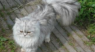 Какому знаку Зодиака какая подходит кошка