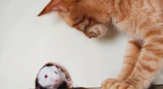 Все о мышах и как избавиться от них