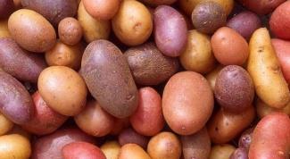 Какой сорт картофеля лучше всех