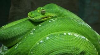 Каких змей можно употреблять в пищу