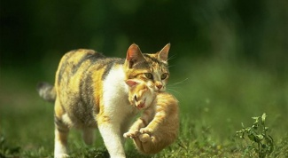 Как выглядит котенок в 2 месяца