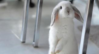 Какие болезни у кроликов