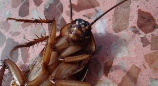 Rак избавитmся от тараканов навсегда