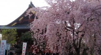 Как понимают японцы счастье