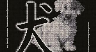 Какому знаку подходит знак Собака