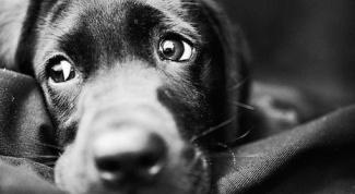 Как выглядят глисты у собак