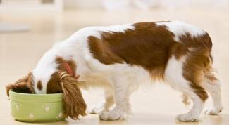 Какой корм выбрать для собак