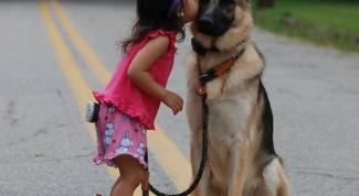 Какую лучше всего выбрать собаку
