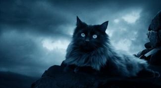 Какая кошка подходит знаку Зодиака