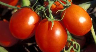 Все о томатах: как выращивать