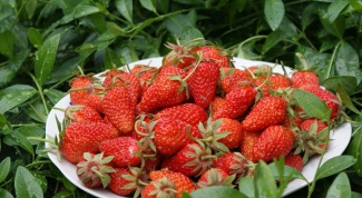 How to achieve a rich harvest of strawberries
