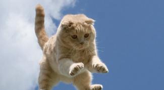 Несколько интересных фактов о кошках