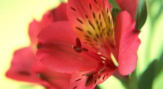 Какие цветы выгоднее всего выращивать
